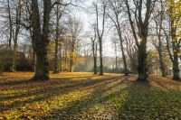 Images:Deer park in Nienstedten